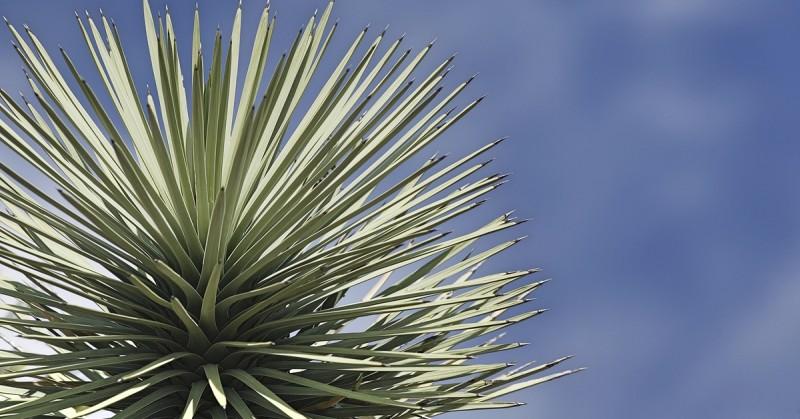 Home Owner's Guide to Desert Trees