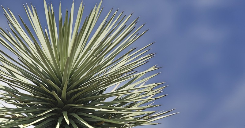 Home Owner's Guide to Desert Trees