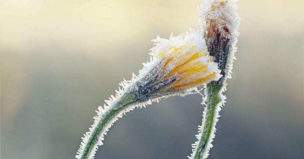 St George Landscaping Tips For December