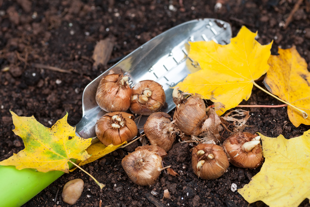 Saint George Landscaping Tips For November