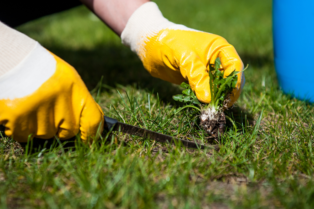 Getting Rid Of Clover, Crabgrass, and Dandelions