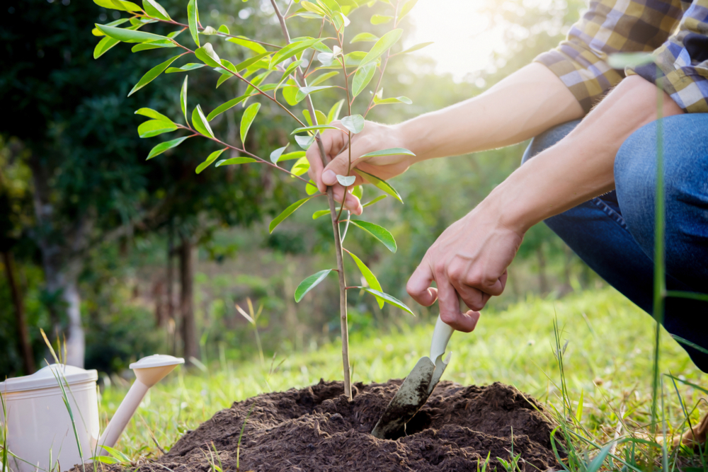 Adding Trees To Your Landscaping Offers More Than Just Pretty Scenery